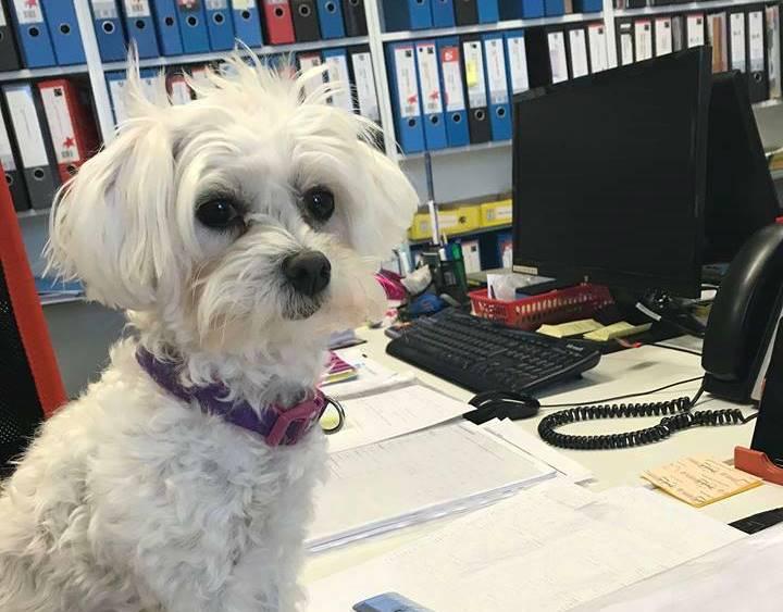 Pies w firmie – koszt czy atrakcja?